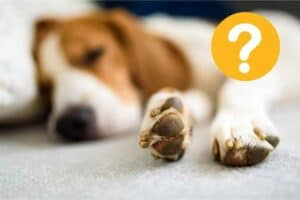 can beagles be left alone