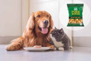 can dogs eat pork rinds