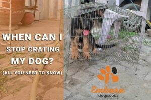 when-can-i-stop-crating-my-dog