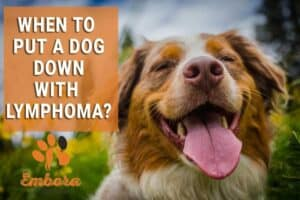 when to put a dog down with lymphoma