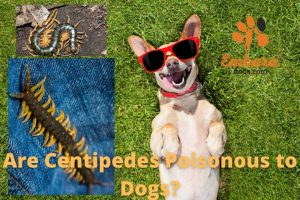 are centipedes poisonous to dogs
