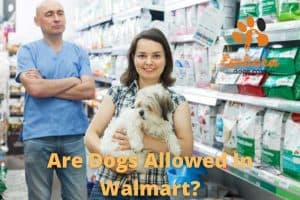 are dogs allowed in walmart