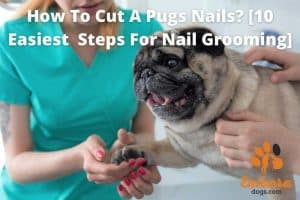 how to cut a pugs nails