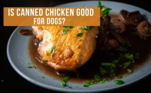 can dogs eat canned chicken